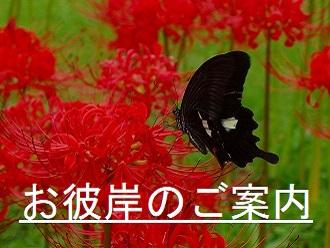 9月お彼岸のご案内【9月20日(月)~26日(日)】
