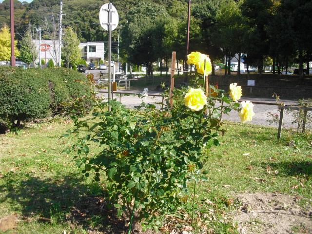 blog_141115-1