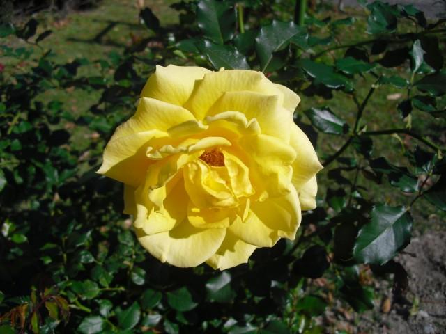 blog_141115-2