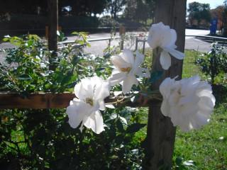 blog_141115-5