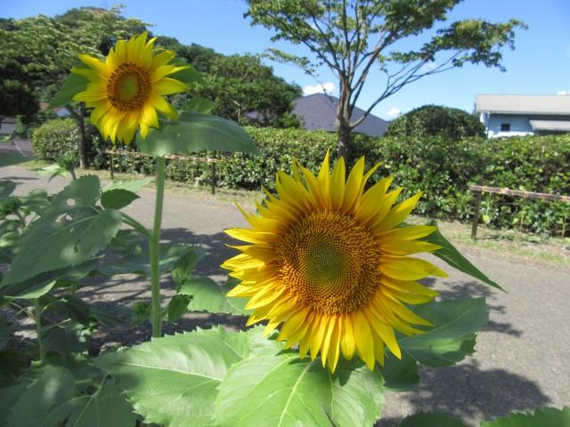 blog_160818-1