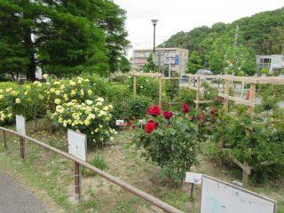 blog_170519-2
