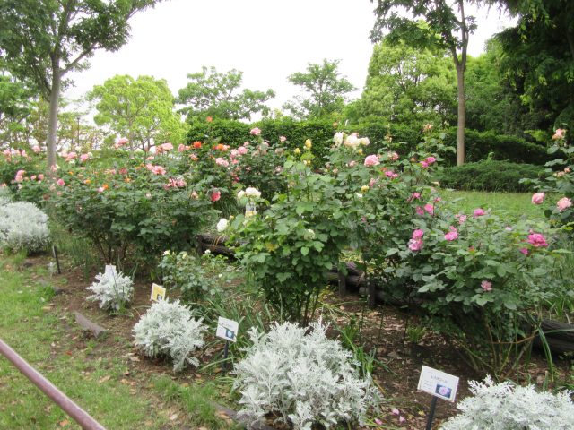 blog_170519-3