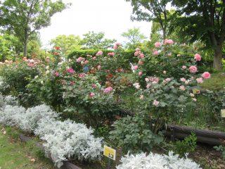 blog_180627-4