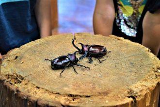 主催イベント:昆虫王者決定戦の画像