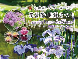 主催イベント:花菖蒲・睡蓮まつりの画像