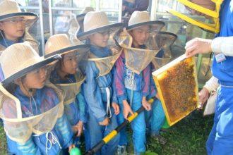 主催イベント:養蜂体験!みつばちのヒミツの画像