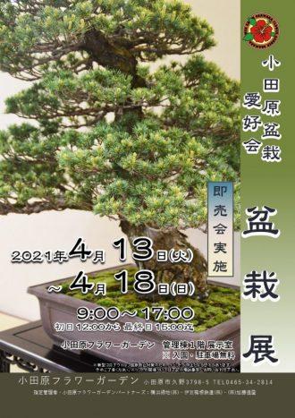 主催イベント:小田原盆栽愛好会 盆栽展の画像
