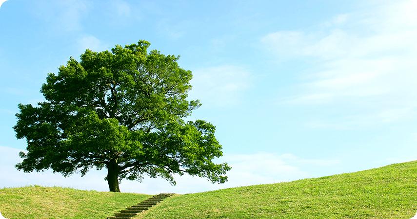 「清水ヶ丘公園」の画像検索結果