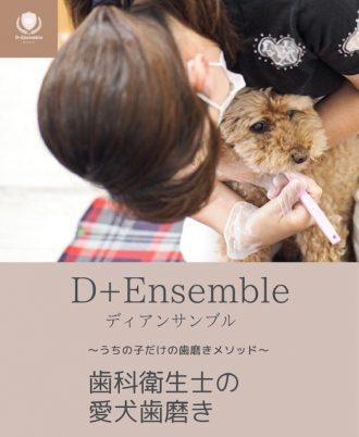 主催イベント:11/6(土)わんちゃん歯磨き講座の画像