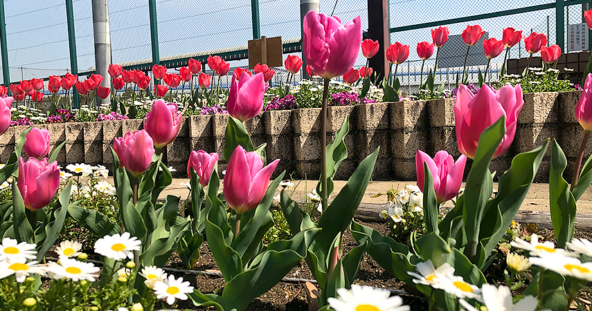 野球場前花壇の写真
